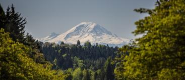 Mt Rainier framed by trees